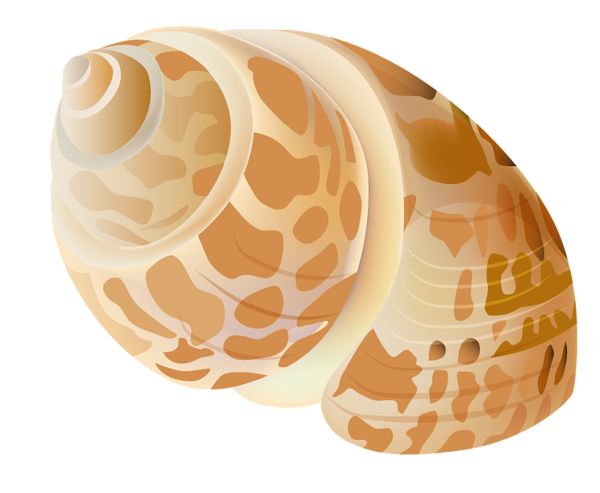 how to clean seashells by boiling