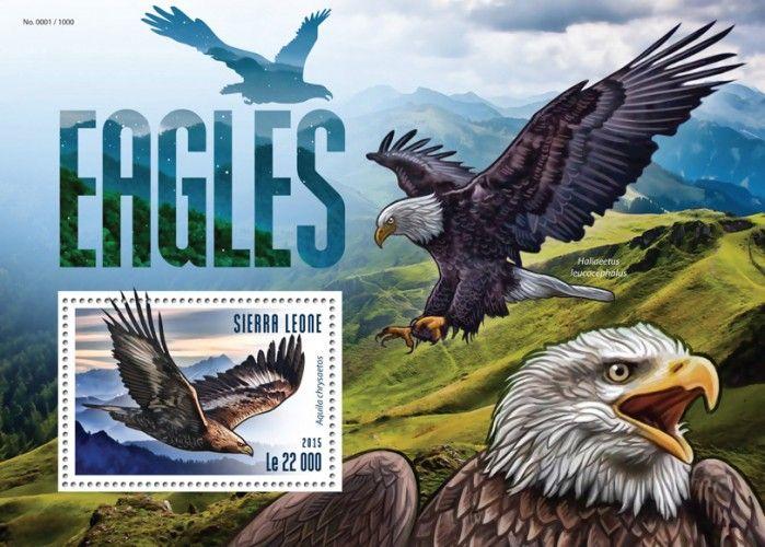 SRL15305b Eagles (Aquila chrysaetos)