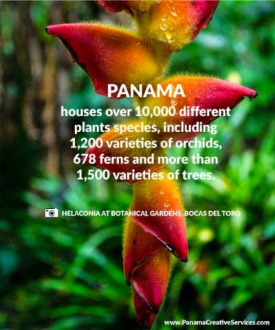 Plants and flowers in Panama