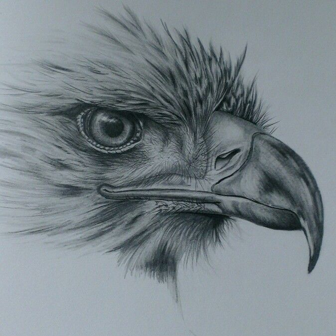 Eagle drawing in pencil bird drawings pinterest for Pencil sketch ideas