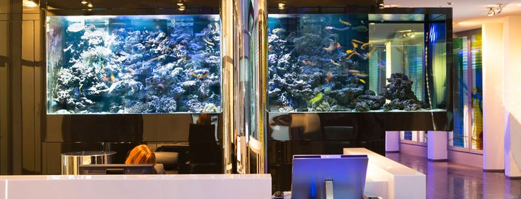 Meerwasser - Aquarium Empfangshalle, München #AquariumWest  Premium-Aquariumbau www.aquariumwest.de #Meerwasseraquariumpodcast  # MarkusMahl  #aquariummuenchen #meerwasseraquarium #aquariumwartung #designaquarium #aquariumbau #meerwasseraquaristik #reeftank #reefbuilders #reefdesign
