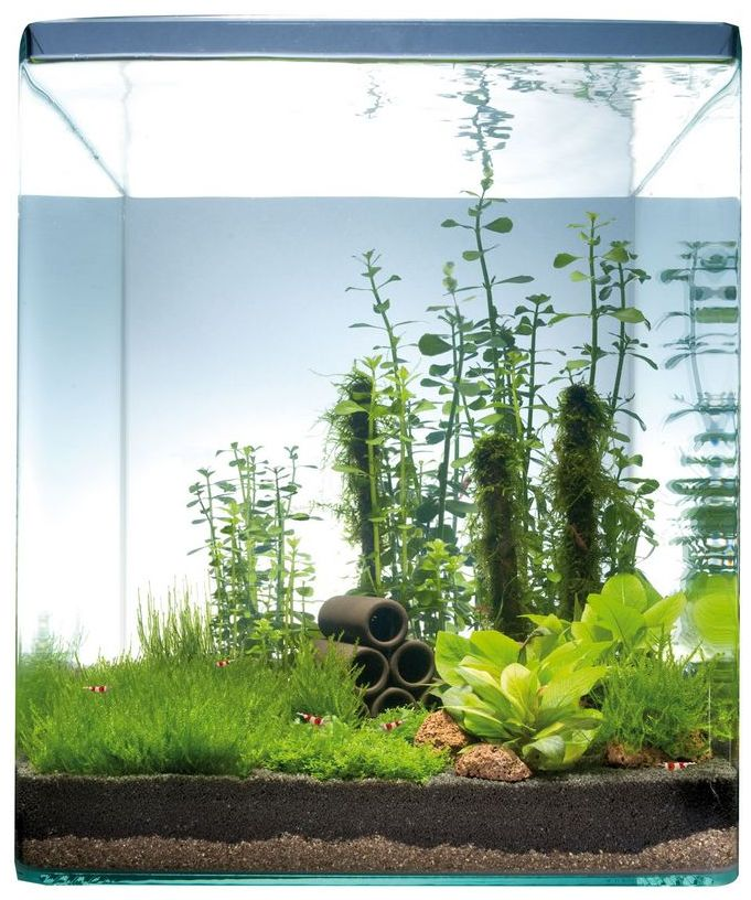 """Dennerle nano aquascape """"Chinese Garden 10/20/30 Liter"""" (this looks 30)"""