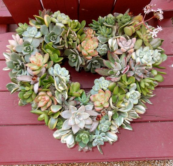 "11"" Living Succulent Heart Wreath- Perfect Valentine's Day Present, Birthday Present, Mothers day present, Anniversary Gift"