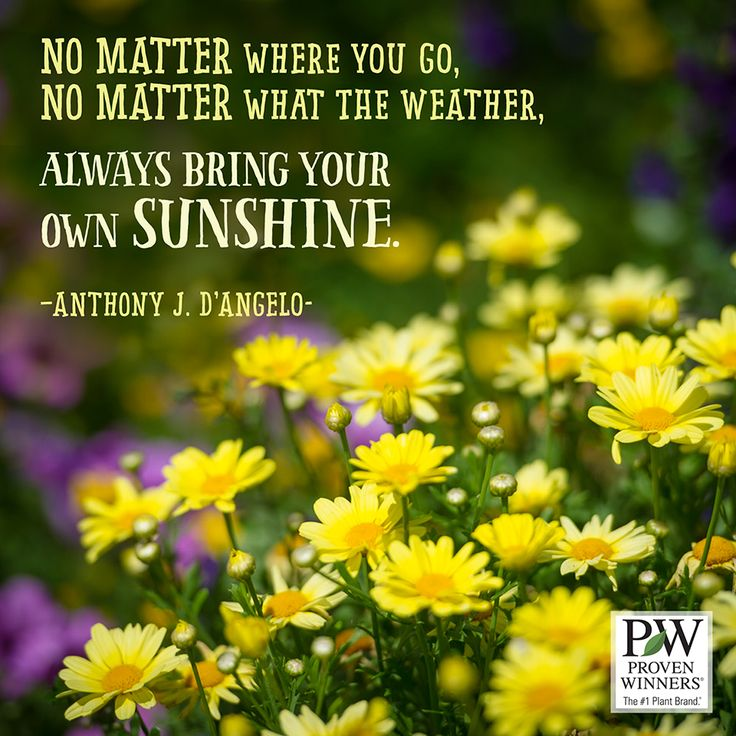 Beautiful Madam In Beautiful Garden Quotes: 26 Best Beautiful Quotes To Share Images On Pinterest