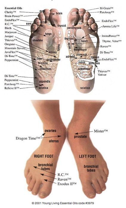 Benefits of apply essential oils to to the soles of your feet. This shows you where to apply for most benefit