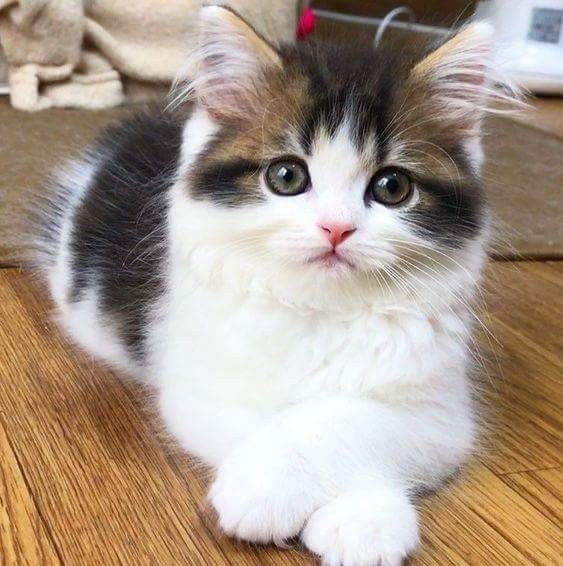 Just look at those casually crossed paws. So young and already a coquette posing for the camera. Let the cat food companies know, a new star is rising!