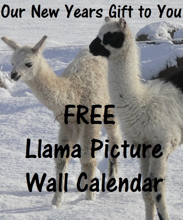 Llamas Quotes Inspirational: 237 Best Images About Llama Sanctuary On Pinterest