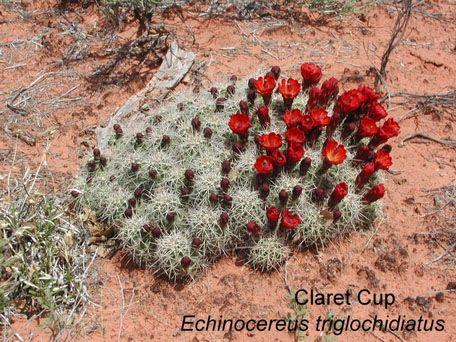 deserts animals and plants - photo #36