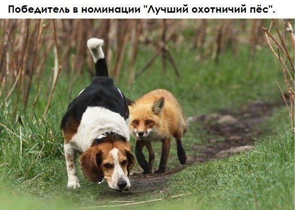 Die Besten 25 Hunting Dog Names Ideen Auf Pinterest