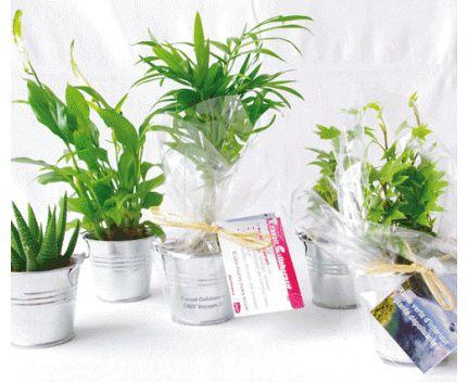 Plante en pot de Zinc en image