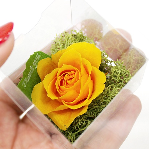Clear Rose Yellow http://www.phy-f.com/products/detail.php?product_id=235