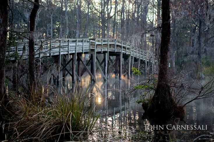 Landscape, Nature. Greenfield Lake, Wilmington, North Carolina.