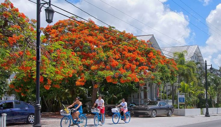 180 best key west and the florida keys images on pinterest for Chelsea pool garden key west