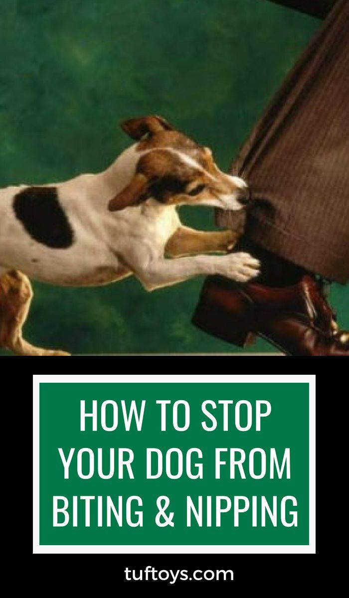 How To Stop Your Dog From Biting Nipping Dog Training Easiest