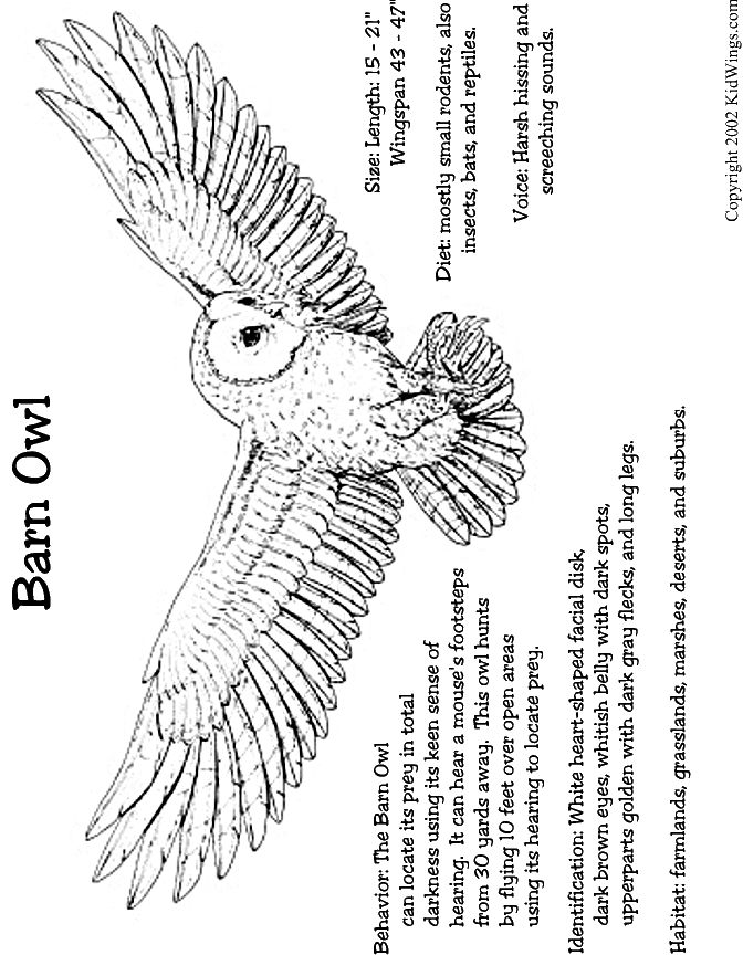 1000+ images about Teaching: Owl Pellet on Pinterest ...