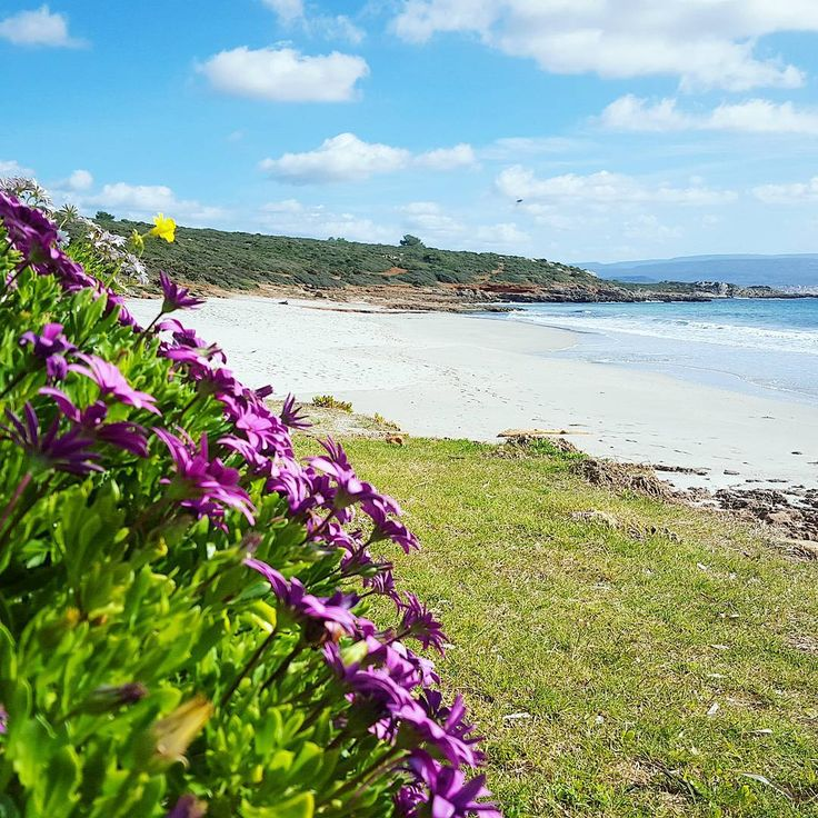 Spiaggia Le Bombarde #alghero#sardegna#sardinia#likes_sardegna#Italia#italy#landscape#sea#beach#igersardegna#meteoit#photo_beaches#lanuovasardegna#picoftheday#lauralaccabadora#thehub_sassari#focusardegna#sardegnaofficial#igersassari#verso_sud#sardiniaexp#volgosardegna#italian_places#sardegna_super_pics#best_italiansites#sud_super_pics#igw_skyline#vivosardegna#italian_trips#sardegna_reporter