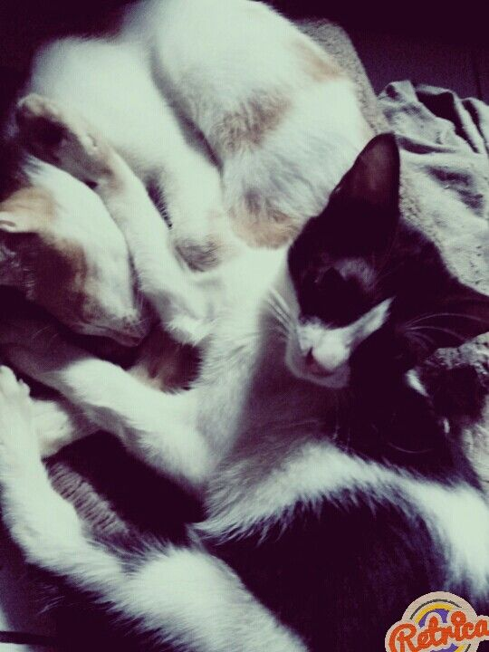 Sleeping with my brother