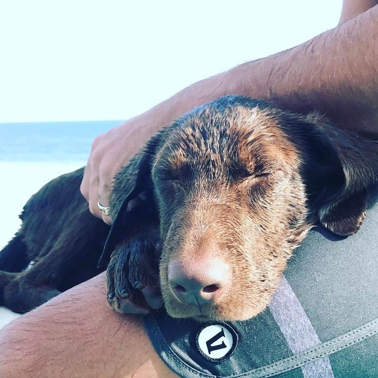Luke Bryan's New Puppy Is Too Adorable for Words!  Please help with my petition to give our animals rights.    https://www.change.org/p/u-s-house-of-representatives-give-the-animals-rights