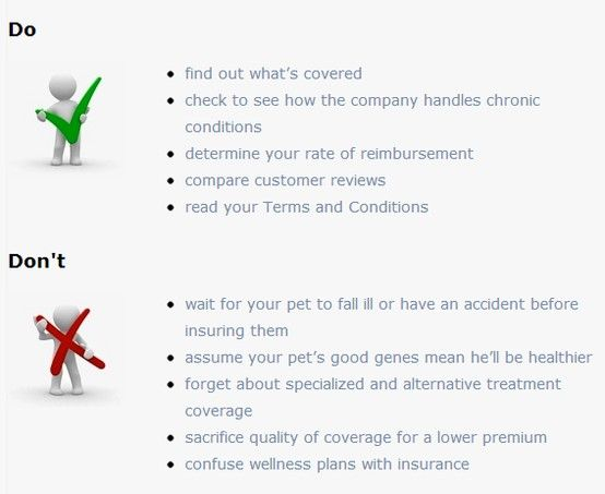 How to choose the best pet insurance policy to help protect your cat or dog, and your budget