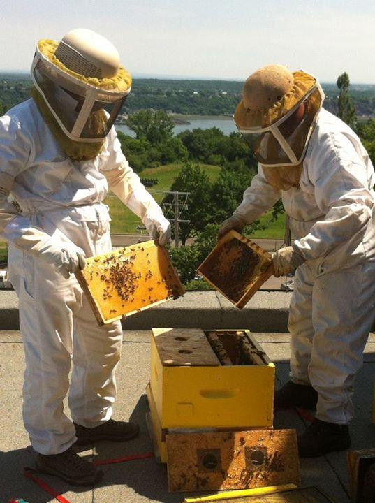 Saviez-vous que le traiteur George V a des ruches sur le toit de l'Hôtel Château Laurier Québec durant la saison estivale ? Demandez notre miel urbain lors de votre prochaine visite. Il est délicieux !