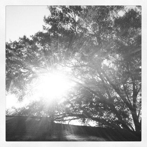 Day 5: Morning Sky