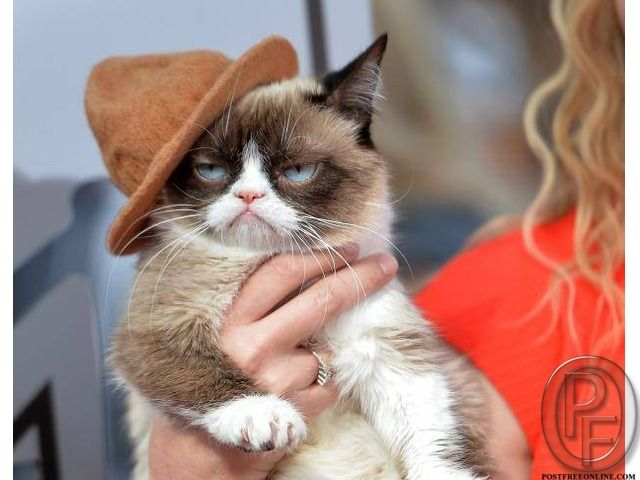 Best Cat Proder Who Can Provide Cats At Best Price In Mumbai Maharashtra India In Pet Animals And Accessories Category Under Grumpy Cat Movie Grumpy Cat Cats