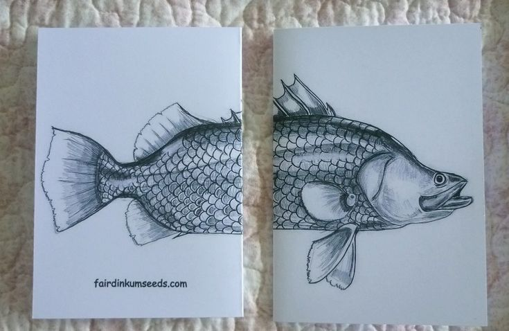 Barramundi Fish Greeting Card Gift