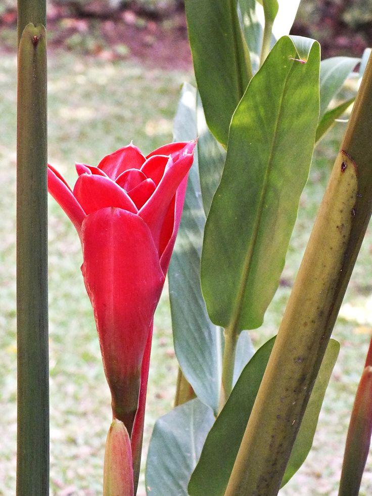 beautiful like rose