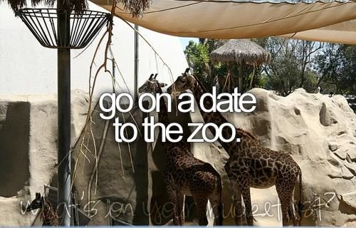 to do: a date to he zoo would be so great *_* now u read this u know what to do future husband ;)