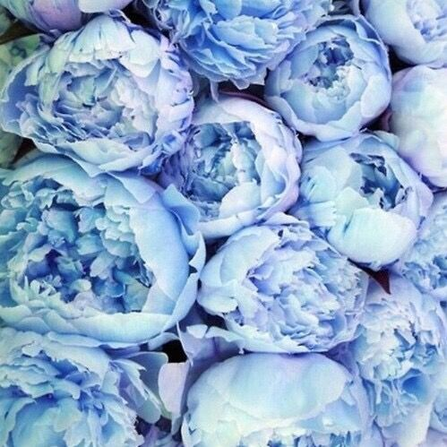 Serenity blue peonies???Cool Chic Style Fashion                                                                                                                                                                                 More