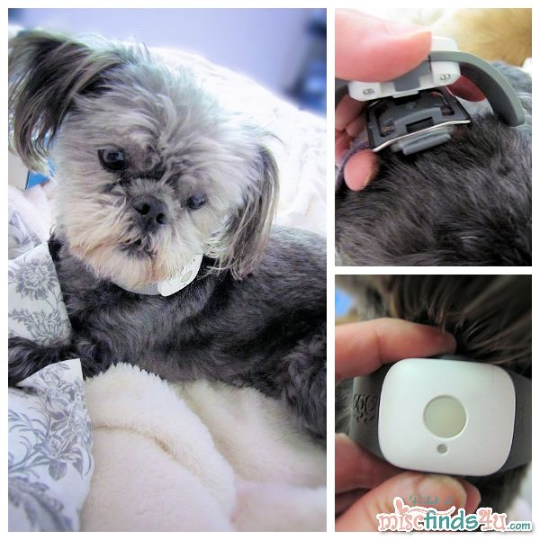 gps tracking dog collar iphone