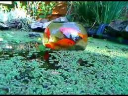 Image result for observatory diy dome cool stuff for Cool koi ponds