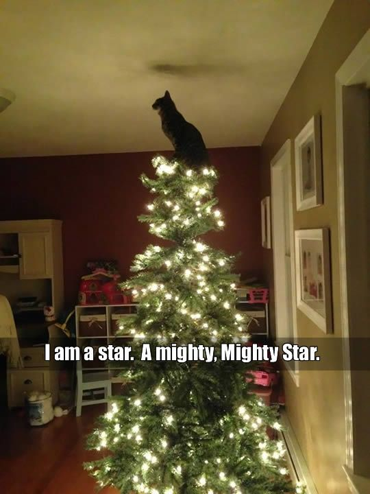 funny pictures: cat standing on top of Christmas tree.