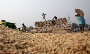 Tackling climate change is the key to producing enough nutritious food to beat hunger | Neven Mimica and Phil Hogan | Global development | The Guardian