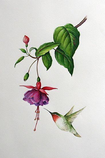 hummingbired fuschia | fuschia and hummingbird - Painting - Nature Art by Margit Sampogna