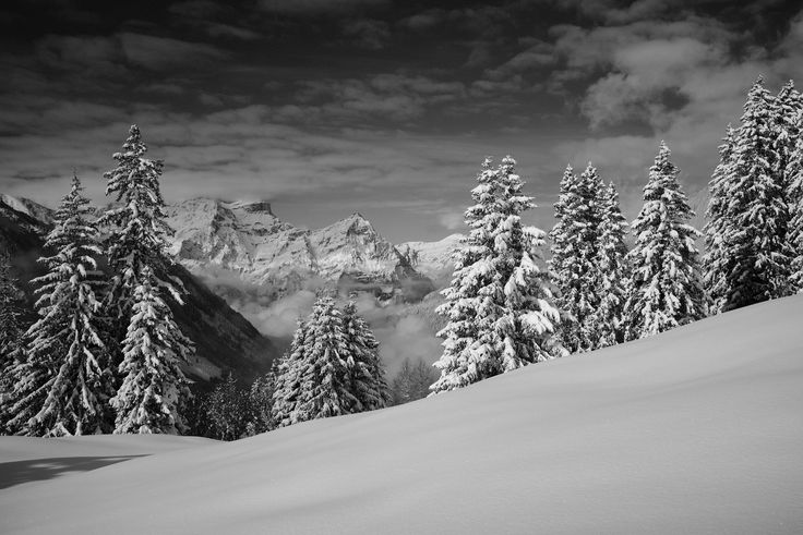 https://flic.kr/p/QFLh64   First snow in Glarus   A bit an older shot... This picture was taken on one of the first days with snow this season. We started our snowboard touring season this day, but unfortunately it was way too warm and not steep enough for riding... Though I got this winter-wonderland shot - hope you like it!