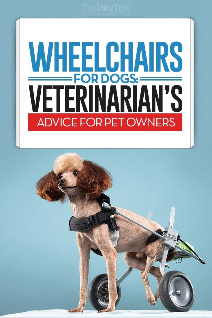 The Vet S Guide On Wheelchairs For Dogs 9 Things To Know Dog