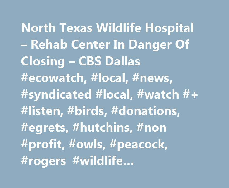 North Texas Wildlife Hospital – Rehab Center In Danger Of Closing – CBS Dallas #ecowatch, #local, #news, #syndicated #local, #watch #+ #listen, #birds, #donations, #egrets, #hutchins, #non #profit, #owls, #peacock, #rogers #wildlife #rehabilitation #center, #vultures, #wildlife http://wichita.remmont.com/north-texas-wildlife-hospital-rehab-center-in-danger-of-closing-cbs-dallas-ecowatch-local-news-syndicated-local-watch-listen-birds-donations-egrets-hutchins-non-profit-o/  # North Texas…