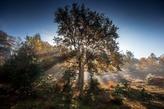 Nieuw in mijn Werk aan de Muur shop: Autumn light
