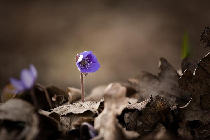 Purple flower www.hevesifoto.hu