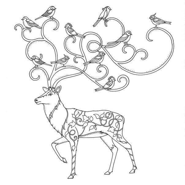 Coloring Pages Books Johanna Basford Colour Color Art Forests Searching