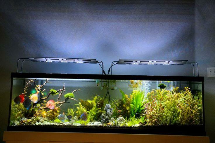 Fresh Fish Home 2