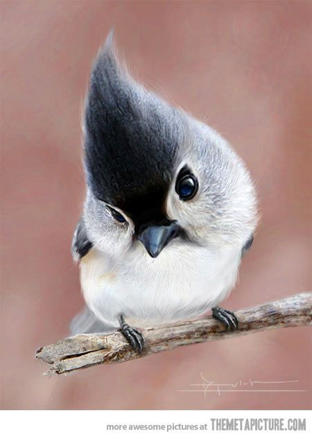 Incredibly fotogenic bird: Tufted Titmouse