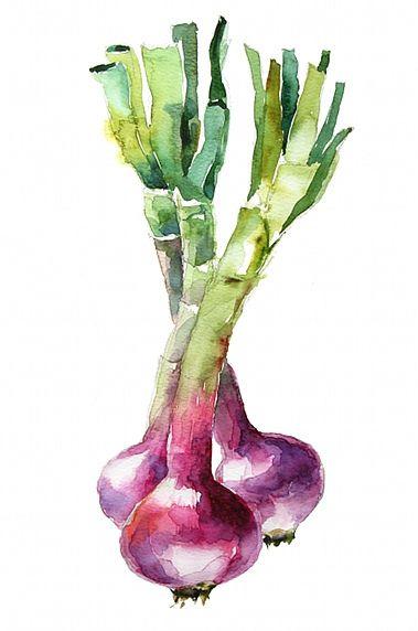 Organic onions by aquarelle_art, via Flickr