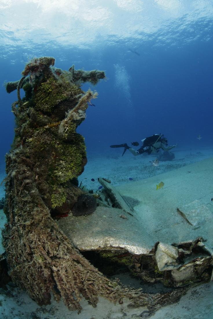 149 Best Cozumel Island Riviera Maya Mexico Images On