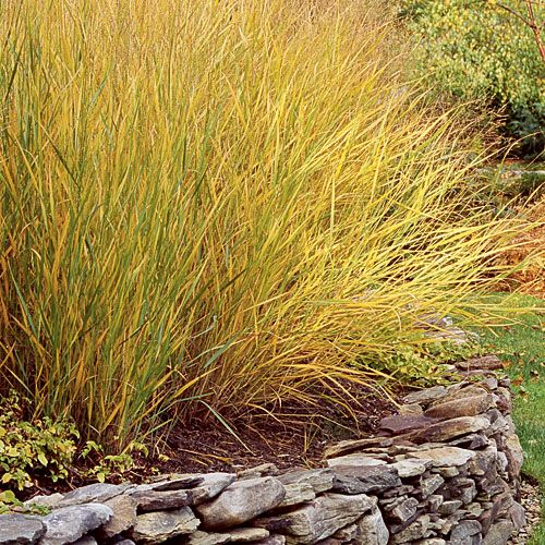 56 best images about lakeside on pinterest tropical for Small ornamental grasses