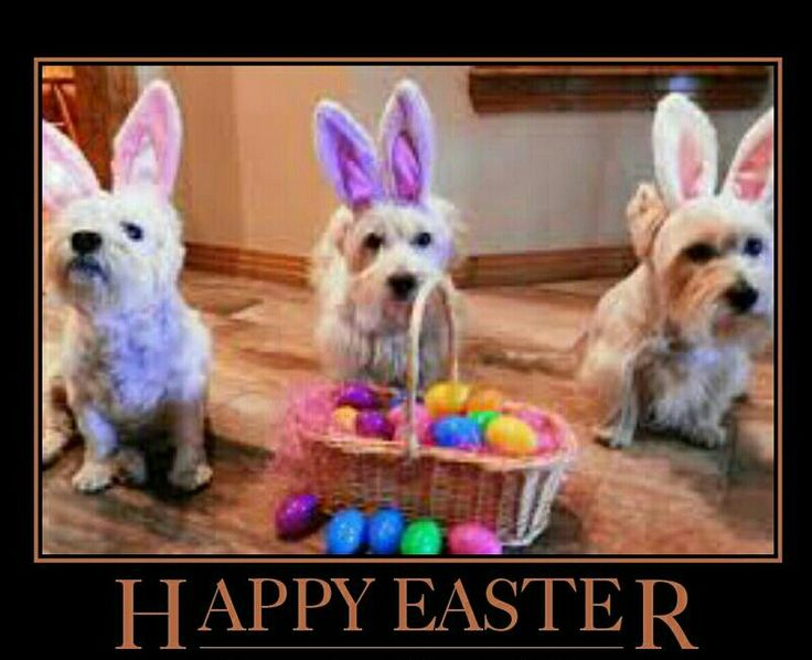 Happy Easter❤❤❤