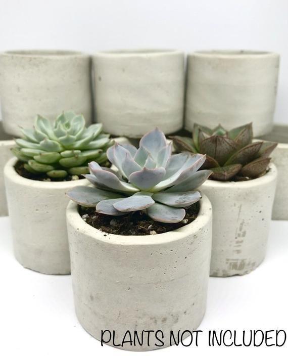 100 Concrete Succulent Planters 2 Inch Pots 2 Inch Succulent Pot Wedding Favors Succulent Favors Bulk Succulent Planters 2 In Planters Succulent Pots Succulents Planters