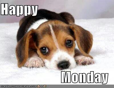 Image result for nice week images with puppies