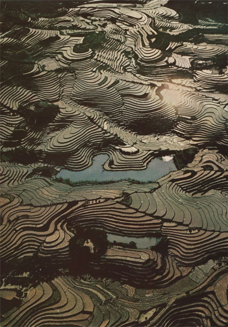 Terraced rice paddies, Taiwan (National Geographic, 1969).